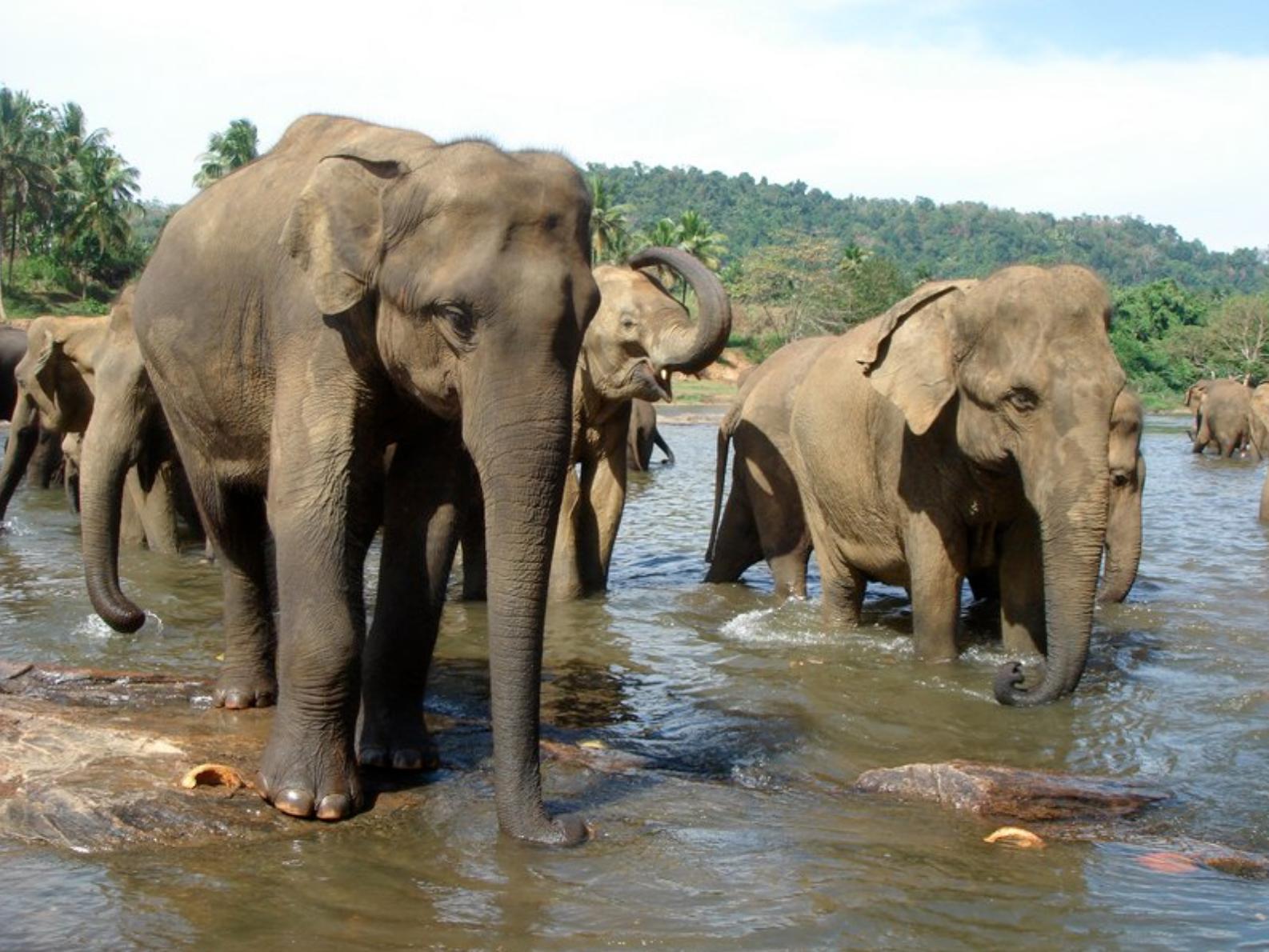 Sri Lanka Pinnawala Tour